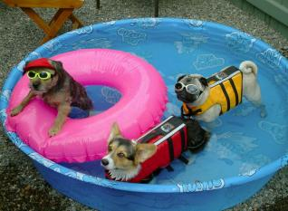 pool_dogs