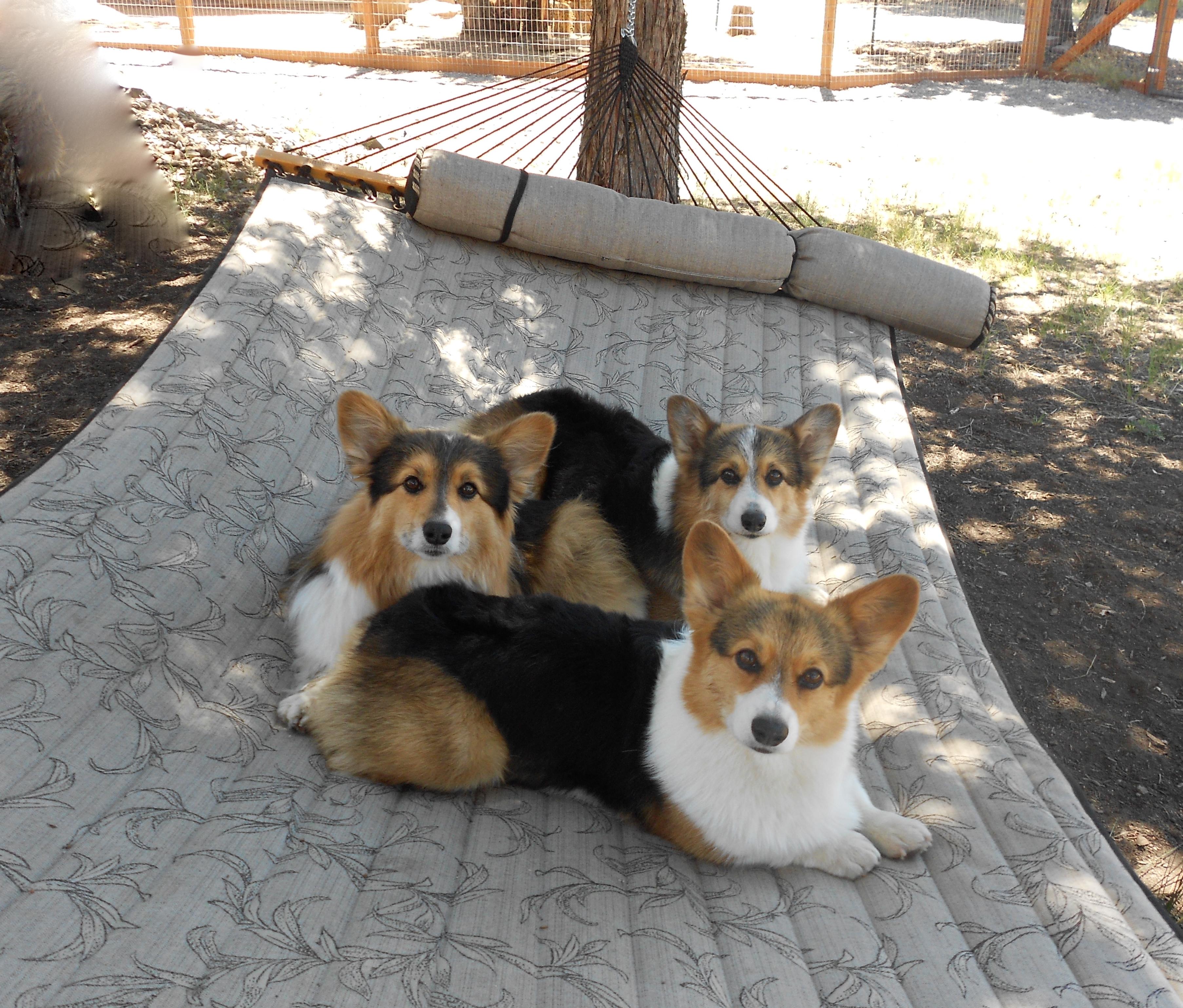 beach stuck hammock resort of best in haven habitat for a dogs hammocks on ideas home cat pet dog